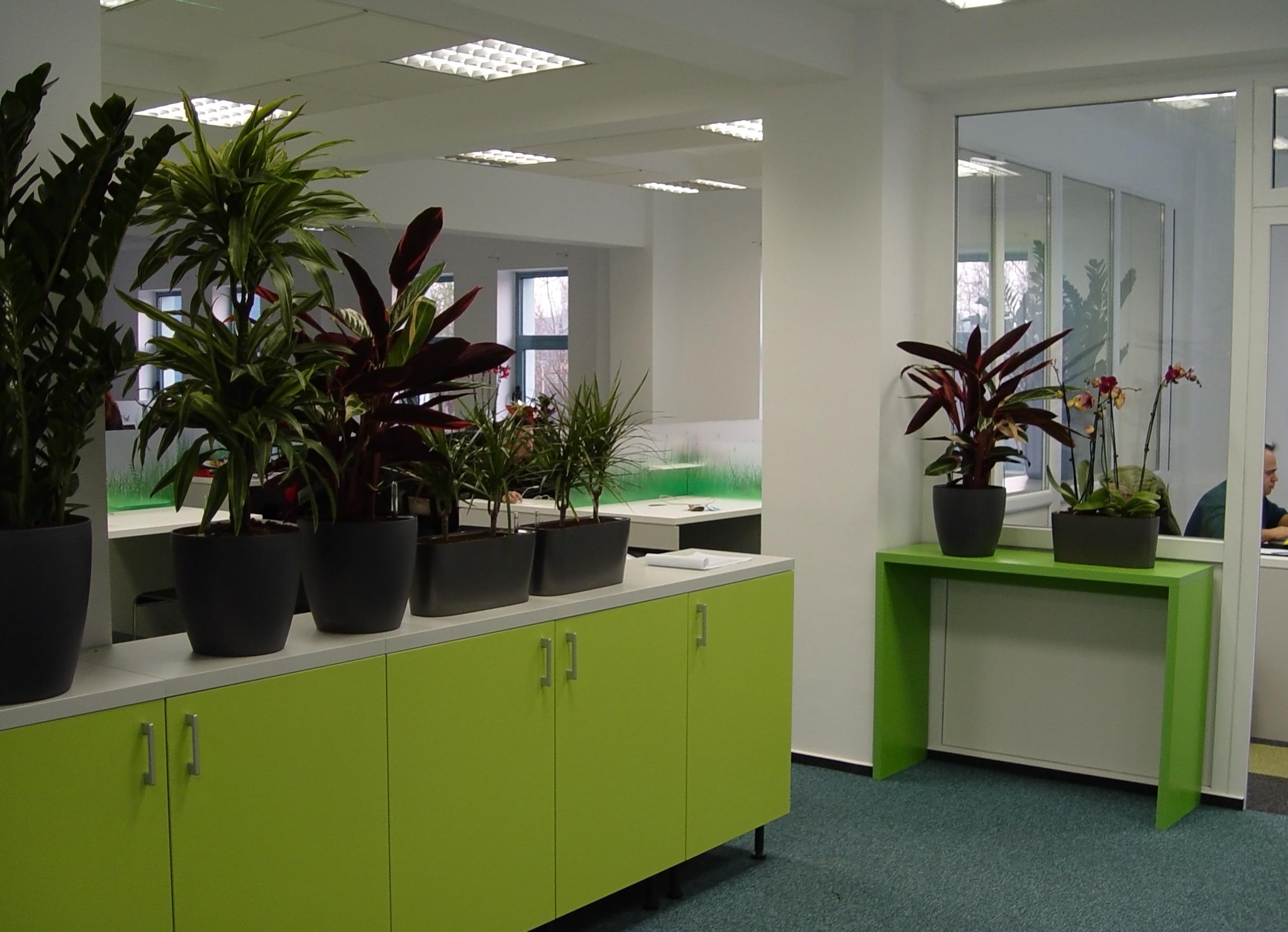 amenajare birouri plante