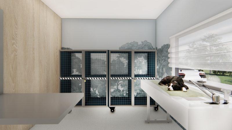 blue vets cabinet cluj Bun_9 – Photo